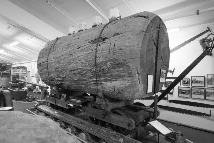 Kauri Museum Matakohe.jpg