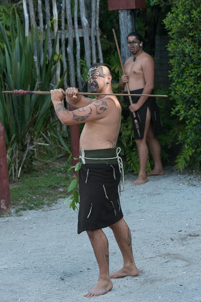 Maori Krieger.jpg