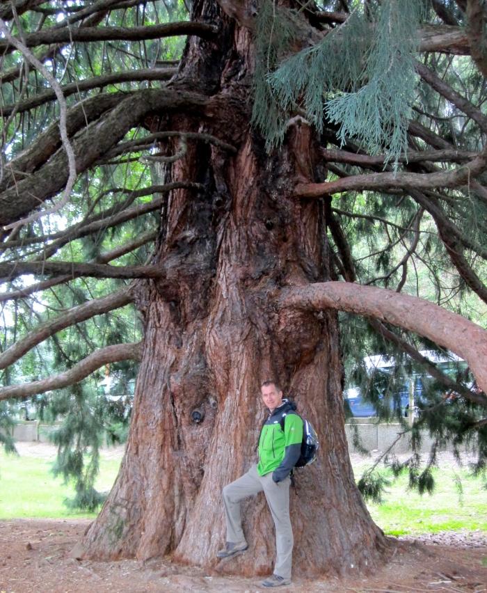 ein Mann wie ein Baum.jpg